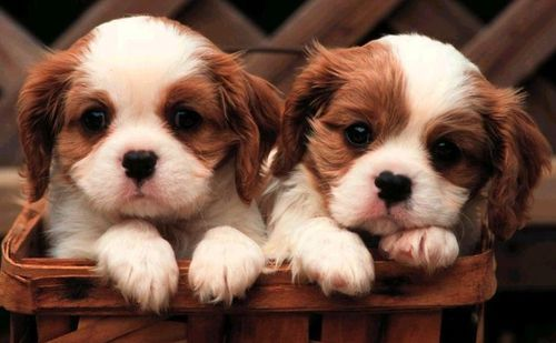 Cute little puppies