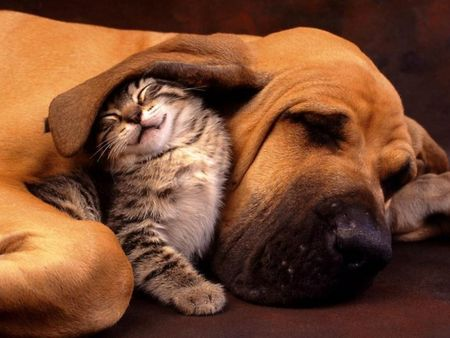 Dog Loves Cat-Cat Loves Dog!
