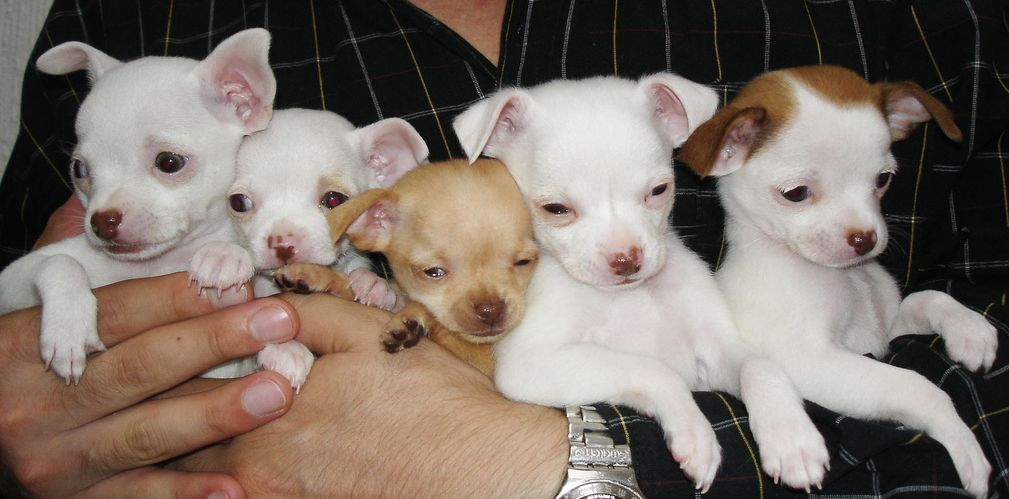 A handful of pups!