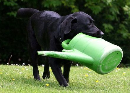 Not an essential piece of dog equipment!