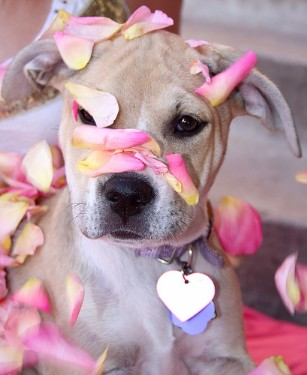 Puppy in bloom--no dog fighting from her!
