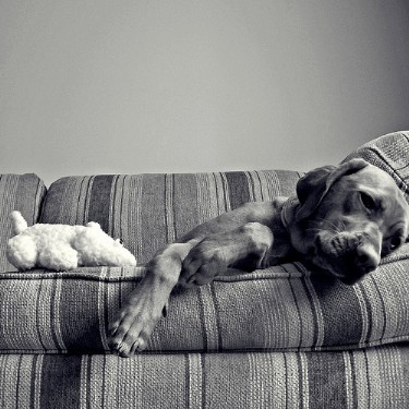 Puppy on a sofa