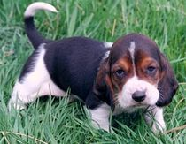 Cute young dog